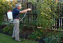 Garden spraying christchurch for Gardening services christchurch